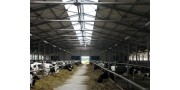 Aeroionization of livestock buildings